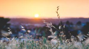 Preview wallpaper grass, flowers, blur, sunset, field