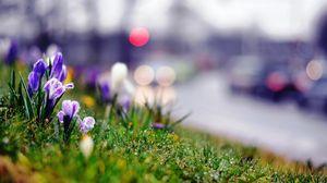 Preview wallpaper grass, flowers, plants, summer