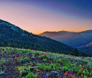 Preview wallpaper grass, flowers, stones, mountains, slopes, hills, wood, light, orange