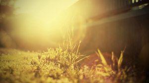 Preview wallpaper grass, light, bright, sunny