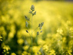 Preview wallpaper grass, plant, macro, inflorescence, closeup