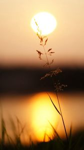 Preview wallpaper grass, sunlight, sunset