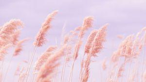 Preview wallpaper grass, wind, pink, field