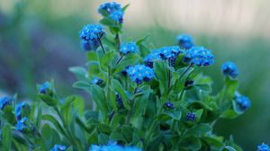 Preview wallpaper green, leaves, petals, flowers, forget-me-blue
