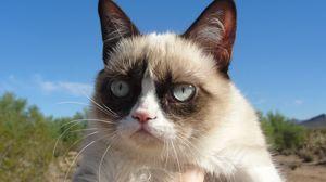 Preview wallpaper grumpy cat, cat, dissatisfied