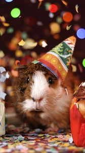 Preview wallpaper guinea pig, holiday, multicolored