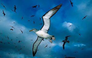 Preview wallpaper gulls, flock, sky, clouds, birds, sea