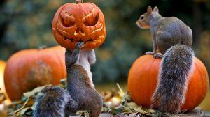 Preview wallpaper halloween, squirrels, pumpkin, mask