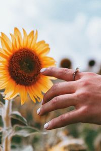 Preview wallpaper hand, ring, sunflower, flower