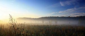 Preview wallpaper haze, veil, herbs, field, sky, blue, awakening, morning