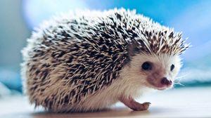 Preview wallpaper hedgehog, eyes, needles