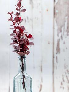 Preview wallpaper herbarium, leaves, vase, aesthetics