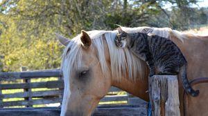 Preview wallpaper horse, cat, friendship