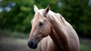 Preview wallpaper horse, face, eyes
