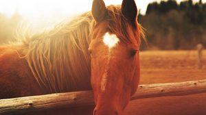 Preview wallpaper horse, face, light, mane
