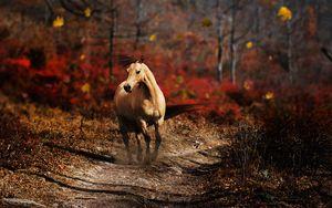 Preview wallpaper horse, field, grass, trail, running, wind