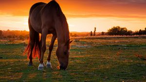 Preview wallpaper horse, field, pasture, sunset