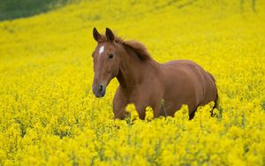Preview wallpaper horse, flowers, golf, walking, nature, landscape