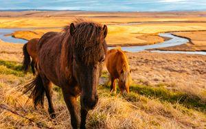 Preview wallpaper horse, grass, field
