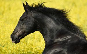 Preview wallpaper horse, grass, mane, wind