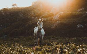 Preview wallpaper horse, grass, sunlight, stones