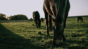 Preview wallpaper horse, grass, walk