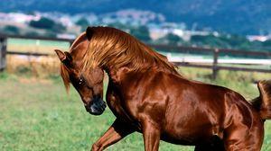 Preview wallpaper horse, mane, brown, grass