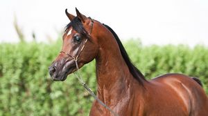 Preview wallpaper horse, muzzle, team
