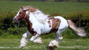Preview wallpaper horse, race, horse racing, grass, mane