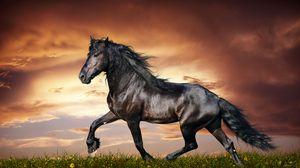 Preview wallpaper horse, running, sunset, field, grass, flowers