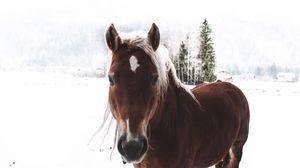 Preview wallpaper horse, snow, muzzle