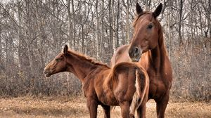 Preview wallpaper horse, stallion, couple, grass, trees