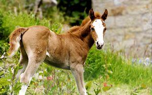 Preview wallpaper horse, stallion, grass, cub