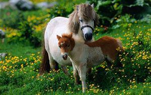 Preview wallpaper horse, stallion, grass, flowers, walk, family