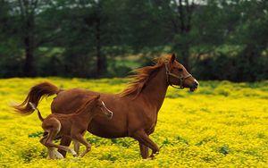 Preview wallpaper horse, stallion, grass, jump