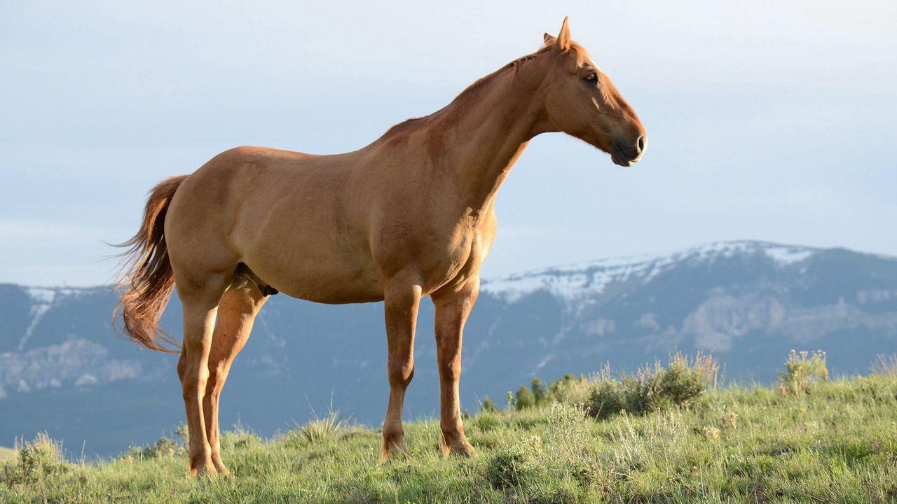 Wallpaper horse, stallion, grass, wind, mountains