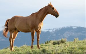 Preview wallpaper horse, stallion, grass, wind, mountains