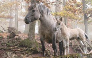 Preview wallpaper horse, stallion, walk, grass, trees, forest