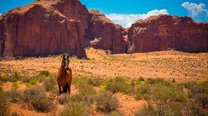 Preview wallpaper horse, usa, arizona, monument valley, desert, wild west