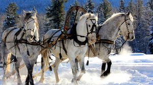 Preview wallpaper horses, three, team, snow, sled