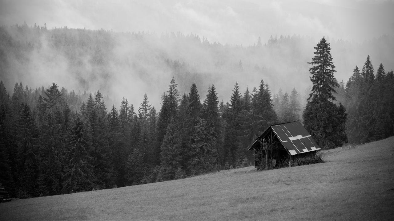 墙纸房子,森林,树木,雾,自然,黑白高清壁纸免费下载