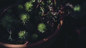Preview wallpaper houseplant, pot, black