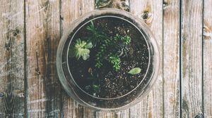 Preview wallpaper houseplant, pot, glass