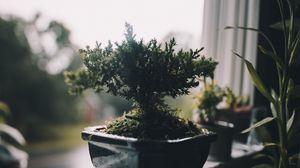 Preview wallpaper houseplant, pot, window