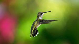 Preview wallpaper hummingbird, bird, background, flight