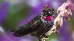 Preview wallpaper hummingbird, bird, branch, blur
