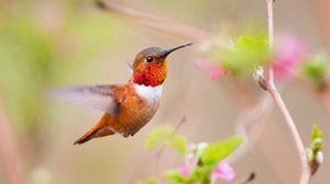 Preview wallpaper hummingbird, bird, branch, blur, flight