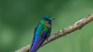 Preview wallpaper hummingbird, bird, feathers, bright