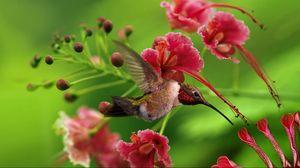 Preview wallpaper hummingbird, bird, flight, wings, flap, color, wood, twigs, flowers