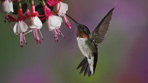 Preview wallpaper hummingbird, bird, flying, beak, flower